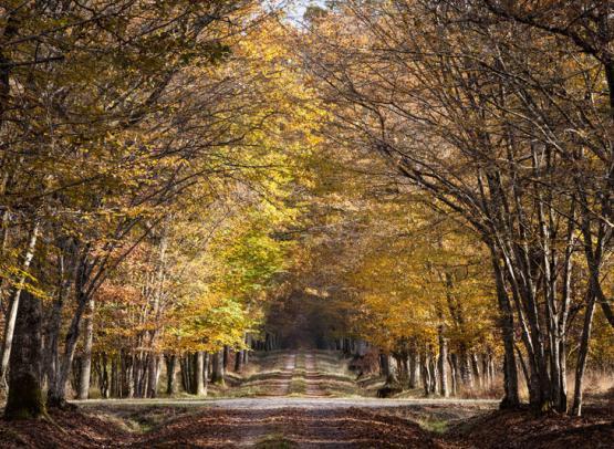 Chambord---réserve-©-Sophie-Lloyd