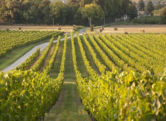 viticulteur-domaine-musset-rouillier-pommeraye2