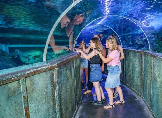 grand_aquarium_de_touraine (12)