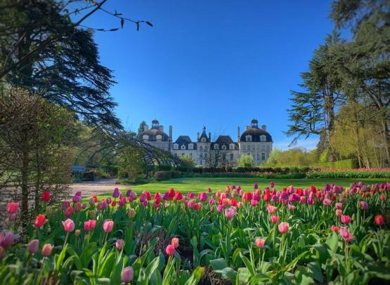 Tulipes-au-chateau-de-cheverny-Mir-Photos-ADT41--22--2