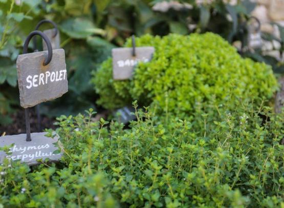 A.Rue-Yevre-le-chatel-plantes-aromatiques