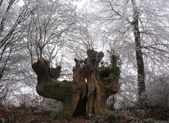 ENS-Vieux-bocage-TBourget-Perche-Nature-(2)