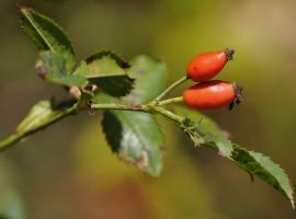 Nature fruits sauvages 16 octobre 21 le vignoble de nantes tourisme