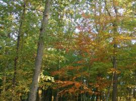 Forêt Mgis 4